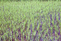 Chinese rice fields in Guilin Royalty Free Stock Photo