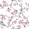 Chinese sakura white seamless vector pattern