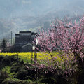 Chinese in the spring of letting a hundred flowers blossom in the wild Stock Images