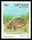 Chinese Three striped Box Turtle Royalty Free Stock Photo