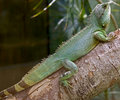 Chinese water dragon 6 Royalty Free Stock Photography