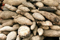 Chinese yam background Royalty Free Stock Photos