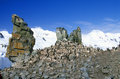 Chinstrap penguins pygoscelis antarctica on half moon island bransfield strait antarctica Stock Photos