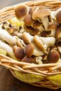 Chiodini mushroon in straw basket Royalty Free Stock Photo