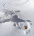 Chipmunk in hole in winter a poking it s head out of the snow the with tracks the snow Stock Photo