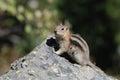 Chipmunk photo taken in grand teton national park a Stock Photo