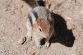 Chipmunk photo taken in grand teton national park a Royalty Free Stock Photos