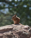 Chipmunk Sitting on a Rock Stock Photography
