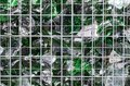 Chips of green broken glass inside a cage Royalty Free Stock Photo