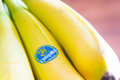 Chiquita bananas poznan poland march close up of ripe Stock Photos