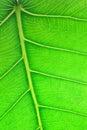 Chiuda sull'immagine del foglio verde Fotografie Stock Libere da Diritti