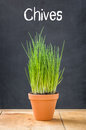 Chives in a clay pot on a dark background Royalty Free Stock Photos