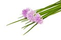 Chives flowers isolated on white Stock Images