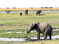 Chobe National Park Royalty Free Stock Photography