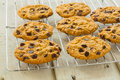 Choc chip cookies on a cooling rack freshly baked Stock Image