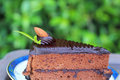 Chocolate Cake - In The Nature