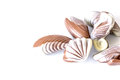 Chocolate candy in the form of sea shells on white table with reflection isolated Royalty Free Stock Photo