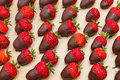 Chocolate covered strawberries on tray Royalty Free Stock Image
