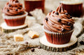 Chocolate cupcakes with chocolate frosting and chocolate chips the toning selective focus Royalty Free Stock Photo