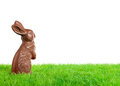 Chocolate easter bunny on a meadow isolated on white Stock Images