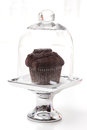 Chocolate muffin elegantly presented under glass cover Stock Photos