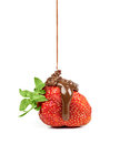 Chocolate is poured on strawberries isolated strawberry in a white background Stock Photo