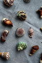 Chocolate and real shells Royalty Free Stock Photo
