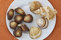 Chocolate sweets and seashells Royalty Free Stock Image