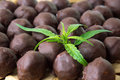 Chocolate truffles with marijuana Royalty Free Stock Photo