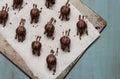 Chocolate Truffles Royalty Free Stock Photo