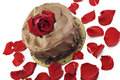 Chocolate Valentines Cake with Rose Royalty Free Stock Photos