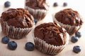 Chocolated muffins with blueberry Stock Photography