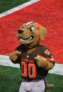 Chomps Cleveland Ohio NFL Mascot The Cleveland Browns Royalty Free Stock Photo
