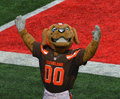 Chomps NFL Mascot The Cleveland Browns Royalty Free Stock Photo