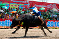 Chonburi Buffalo Races Royalty Free Stock Photography