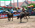 Chonburi Buffalo Races Stock Image
