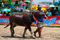 Chonburi Buffalo Races Royalty Free Stock Image