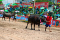 Chonburi Buffalo Races Stock Photos
