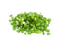 Chopped green onions Royalty Free Stock Photo