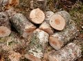 Chopped logs Stock Photography