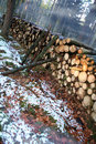 Chopped logs in wintry forest Stock Images