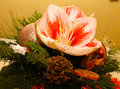 Chrismas Flowers Royalty Free Stock Photo