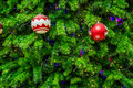 Chrismas tree for background close up shot Royalty Free Stock Images