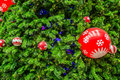 Chrismas tree for background close up shot Royalty Free Stock Photography