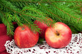Christmas apples three delicious red and fir on white napkin horizontal Stock Photography