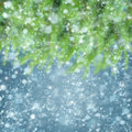 Christmas background with fir tree and snow defosued Stock Images