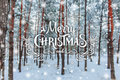 Christmas background with fir trees and blurred background of winter with text Merry Christmas and Happy New Year. Frosty winter l Royalty Free Stock Photo
