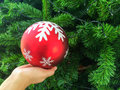 Christmas ball decorations hanging on tree Stock Image