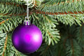 Christmas ball handing on a tree green Royalty Free Stock Image