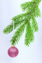 Christmas ball hanging on fir branch green Stock Image
